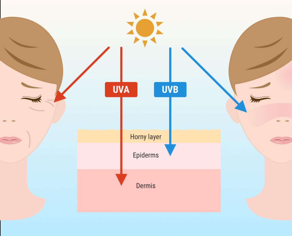 UVA vs. UVB